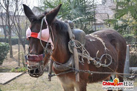 淫驴屯事_老汉拿胸罩给驴做眼罩 有图 汗