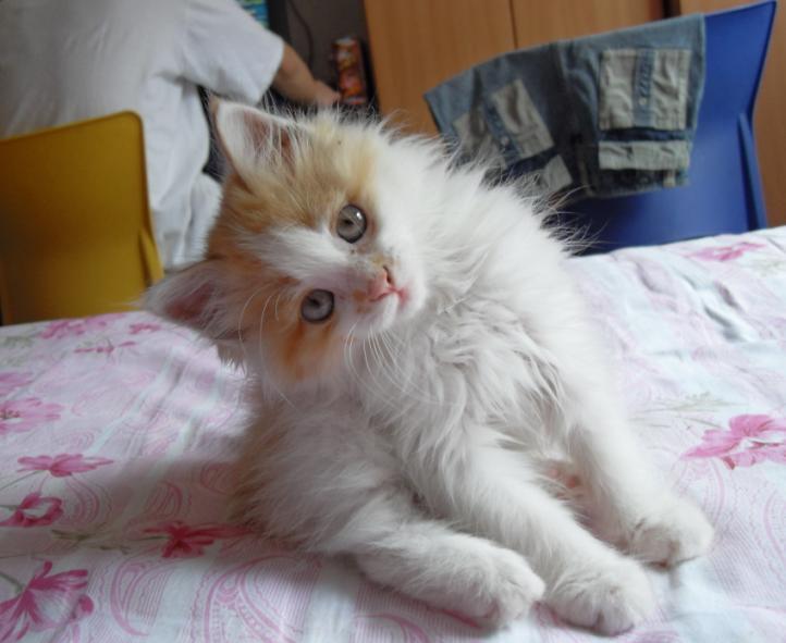 可爱猫咪姐妹头像