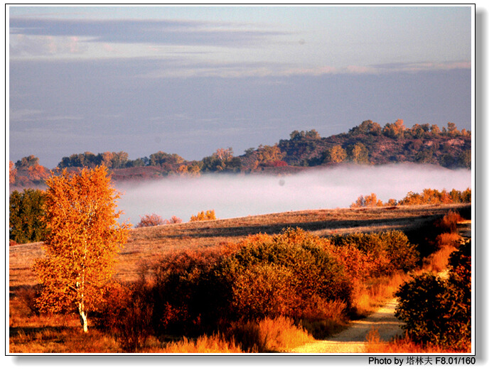 照片:坝上御道口牧区秋季的色彩