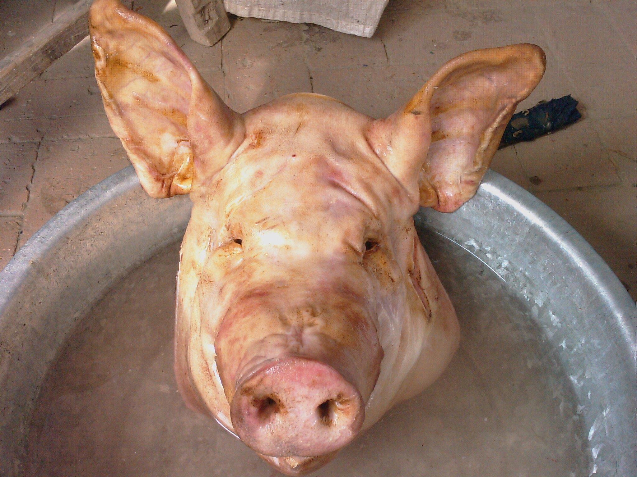 手工制作猪头灯笼