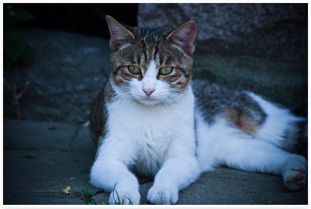 小猫咪啊小猫咪,可爱的小猫咪