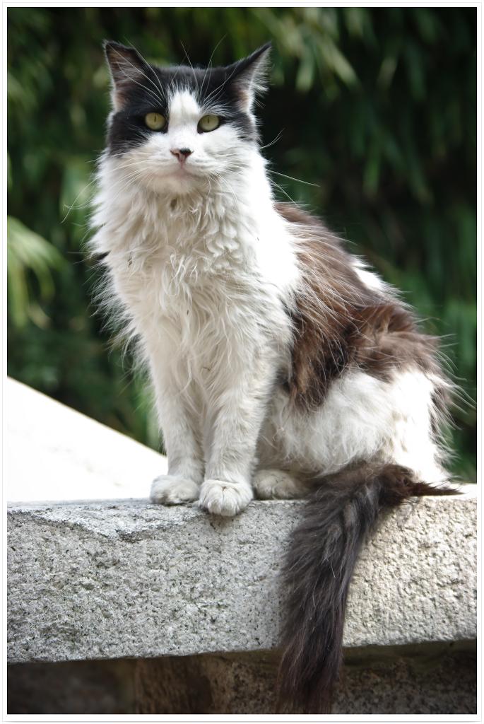 可爱小猫咪_回龙观社区网