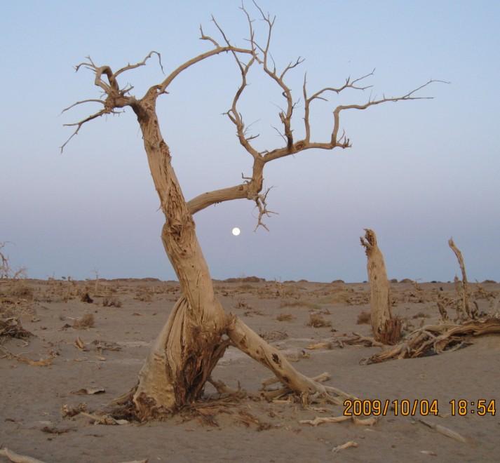 d4,达兰库布镇—神树—居延海—策克口岸—达兰库布镇—黑水城,怪树林