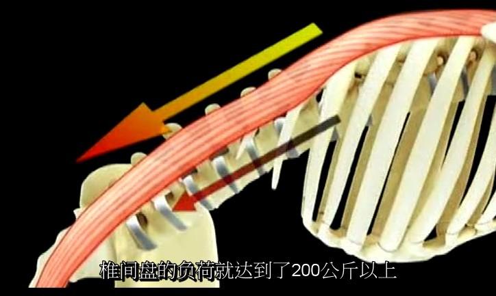 腰背部骨骼结构图