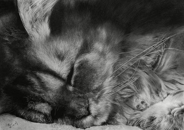 小猫图片素描画可爱