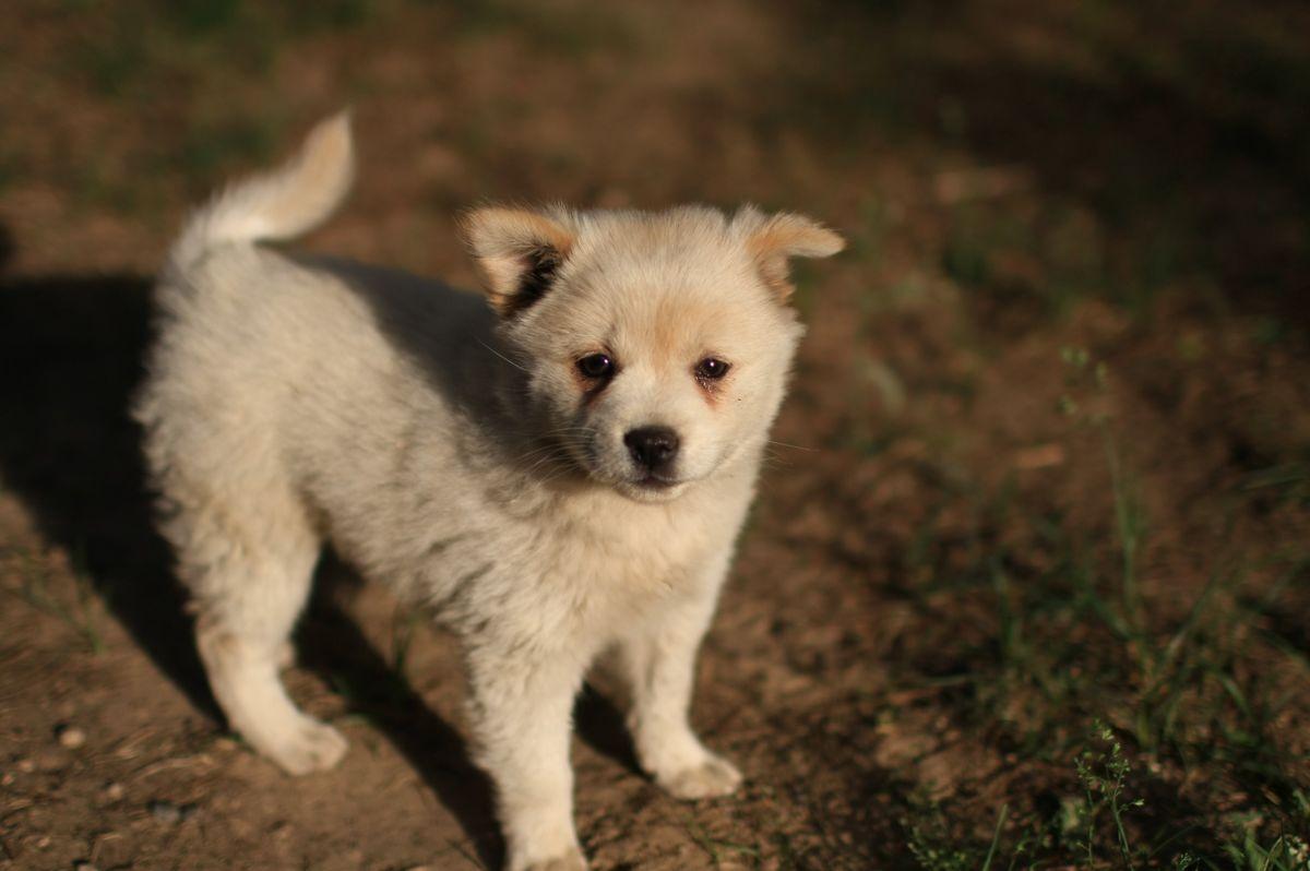 寻爱狗的好心人士收养豆豆和豆妈捡到的一只可爱的小狗!