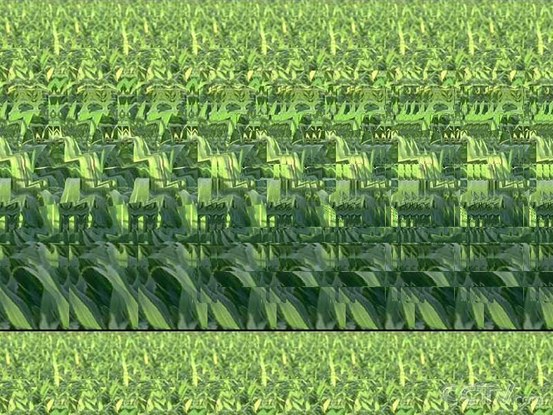 壁纸 成片种植 风景 植物 种植基地 桌面 800_600