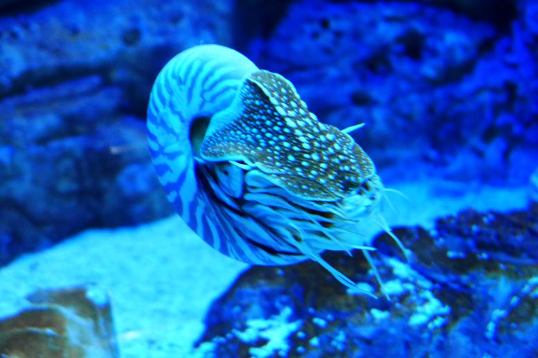 壁纸 海底 海底世界 海洋馆 水族馆 桌面 777_517
